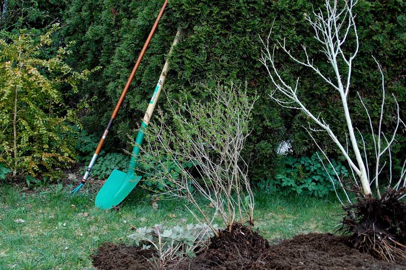 permaculture - forêt jardin - Arbrofruit - Bretagne